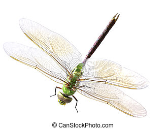 Green dragonfly - single green dragonfly isolated on white...