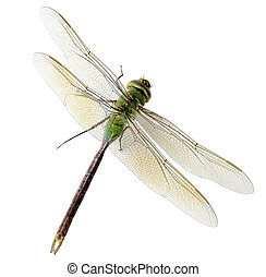 Green Dragonfly - Alive green dragonfly isolated on white...