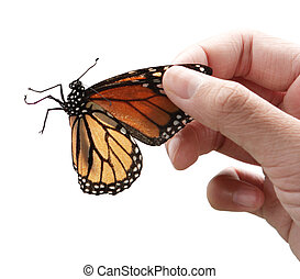 Monarch Butterfly and hand