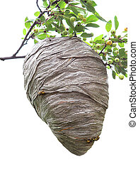 Beehive hanging over a cherry branch isolated on white