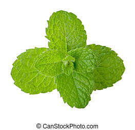Fresh mint - Fresh spearmint isolated on white, clipping...
