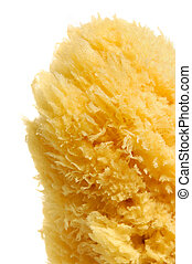 Natural Sea Sponge - Natural sea sponge from Cyprus Isolated...