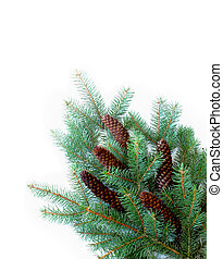 Pinecone and leaves - Branches of pine with cones, isolated...