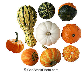 Gourds - Colorful gourds and pumpkins isolated on white...