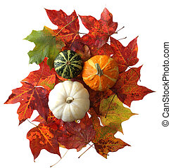 Gourds and Maple Leaf - Color gourds pumpkin on autumn color...