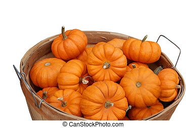 Pumpkins - Basket of small pumkins isolated on white