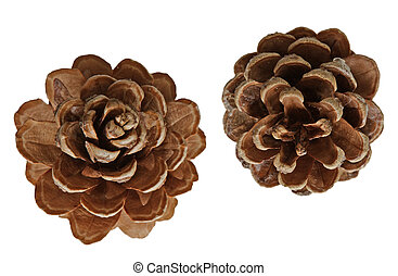Pinecones - Two pine cones isolated on white background