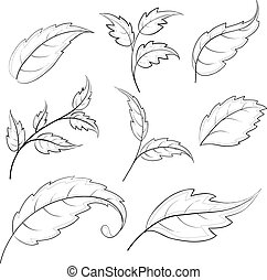 Leaves, contours - Leaves of various plants, set vector...