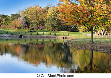 Autumn Pond - Scenery of autumn season in the park
