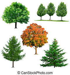 Tree collection - Set of trees isolated on white background