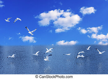 Seagulls flying on the lake against blue sky