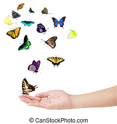 Hand and Butterflies - Hand and colorful butterflies...