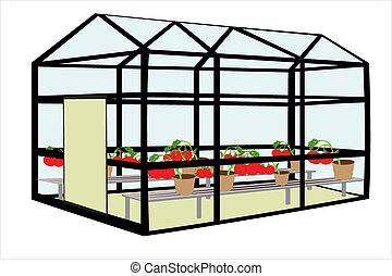 hotbed - Vector illustration of hotbed with tomatos