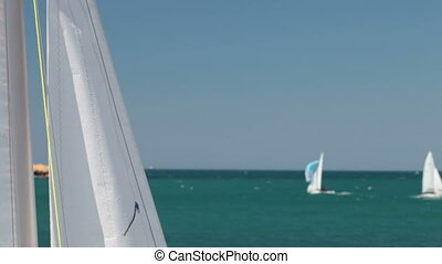 White Sails - white sails flying on the wind in the...