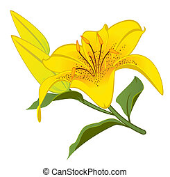 Beautiful tropical lillies - White background with beautiful...