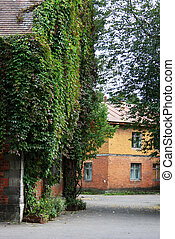Parthenocissus tricuspidata - The former summer residence of...