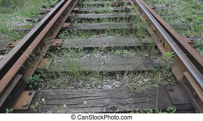 Overgrown train tracks - Single train track with weeds...