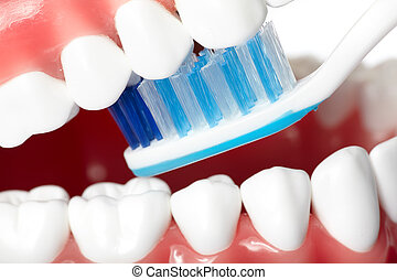 Teeth - Healthy human teeth and tooth brush. Dentistry.
