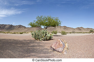 Arizona Desert - Blooming Prickly Pear Cactus and Mesquite...