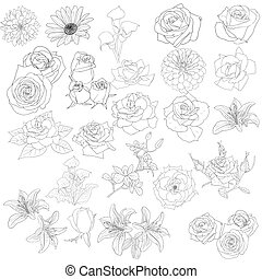 Set of  in hand drawn style roses