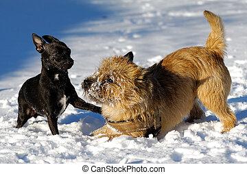 Perros, juego, dos
