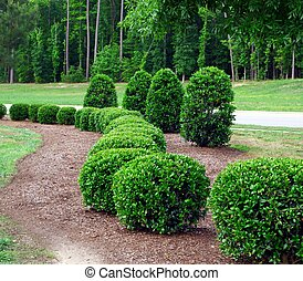 Shrubs and bushes - a row of well maintained and manicured...