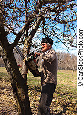 Old farmer trimming apple trees