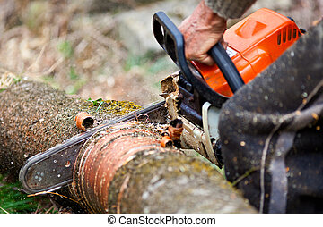 Lumberjack cutting a tree trunk with chainsaw - Closeup of...