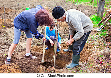 Grandfather, daughter and grandson planting trees in the...