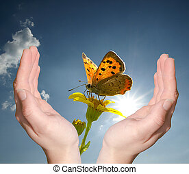 Protecting nature - Hands to protect a butterfly