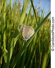 Small butterfly on grass