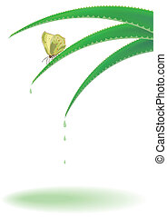 aloe and butterfly - vector background with aloe and...