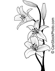 lily - vector illustration of lily in black and white colors