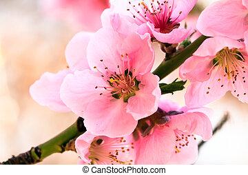 spring flowers - pink spring flowers