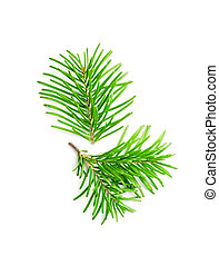 Fir tree branches isolated on white