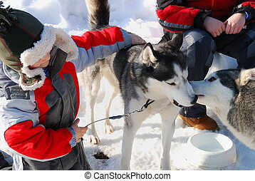 Children with husky dogs