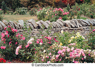 Rose Garden - Various roses growing in a formal garden...