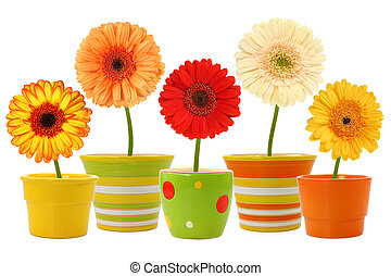 Flowers in pots isolated on white background