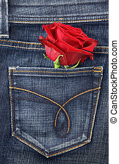 Red rose in jeans pocket