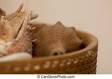 Seashells in a pot