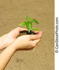 growing green plant