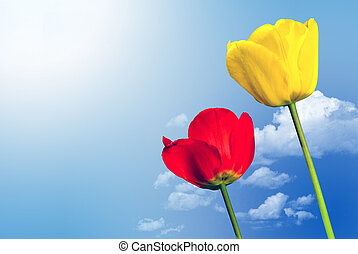 two tulips in front of the sky