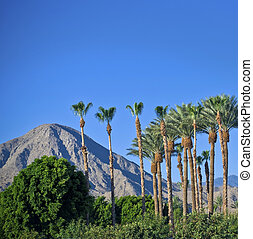 Palm Springs Landscape - The palm trees and mountainous...