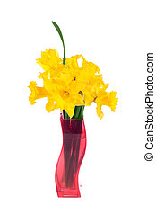 yellow daffodils in the red flowerpot