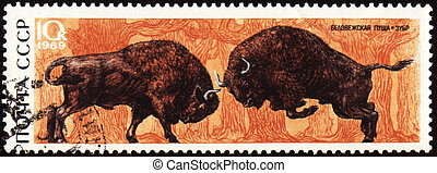 Two bisons on post stamp - USSR - CIRCA 1969: stamp printed...