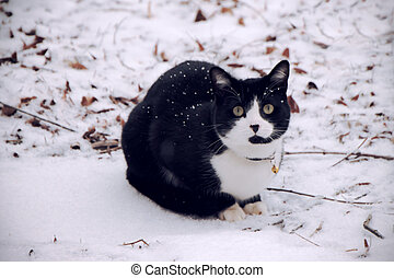 Black and White cat in snow - A black and white cat staring...