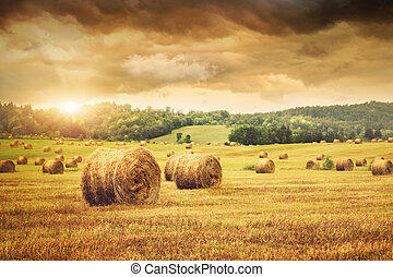 Field of freshly bales of hay with beautiful sunset - Field...