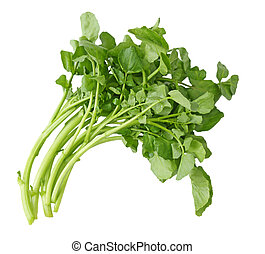 Watercress - Fresh Watercress isolated on white background