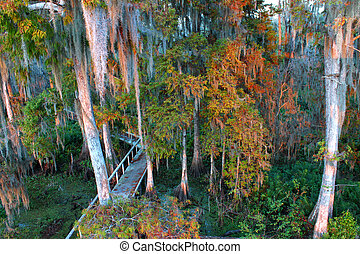 Swamp Boardwalk - Florida - Boardwalk through the thick...
