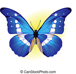 blue butterfly - Vector illustration of beautiful blue...